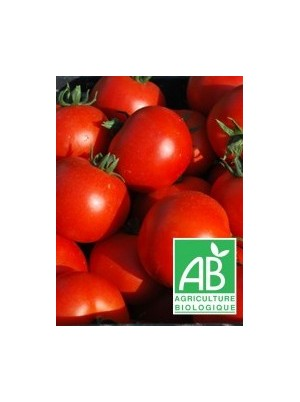 Tomate ronde Bio d'Alsace France- 500g