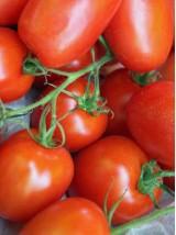 Tomates Roma Bio d'Italie -500g