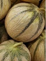Gros Melon Bio de Provence France- le kg