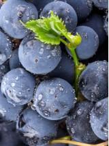 Raisin Noir Muscat bleu d'Alsace France -500g