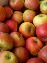 Mélange de pommes à croquer Bio d'Alsace France -1kg