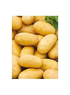 Pomme de terre Monalisa nouvelle Bio de France- 1 kg (purée, potages, frites)