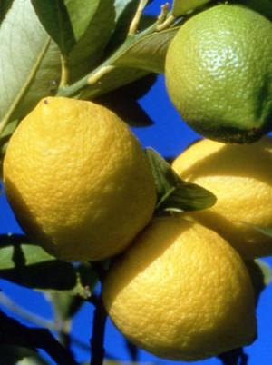 Citron Bio avec feuilles Sicile Italie -500g