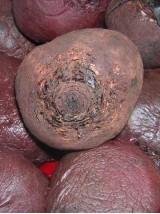 Betterave rouge cuite Bio, sous vide, 500g