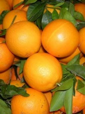 Orange mi sanguine Tarocco Bio d'Italie-le kg (très juteuses)