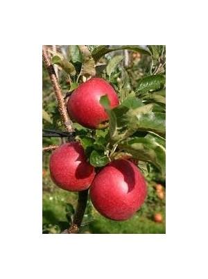 Pomme Rubinette Bio d'Alsace France - 1kg (à croquer)