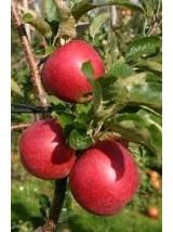 Pomme Allura Bio d'Alsace France- 1kg (croquante, juteuse)
