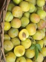 Prune jaune Reine Claude Bio de France -500g