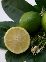 Citron lime Bio origine Mexique -les 100g