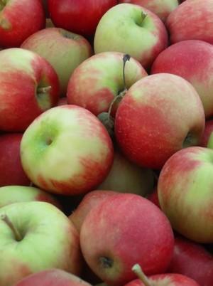 Pomme Allura Bio d'Alsace France- 1kg (sucrée, à croquer)