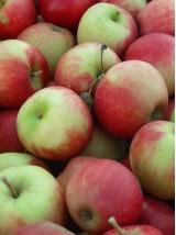 Pommes nouvelles Bio Provence France 1kg