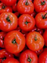 Tomates rondes Bio Alsace France- 500g