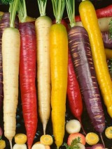 Mélange carottes 3 couleurs bio de Moselle France-1kg