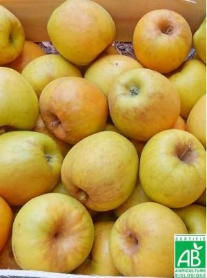 Pomme golden delicious Bio de France - 1kg (sucrée à croquer ou compote)