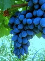 Raisin Bio muscat noir de Provence France-500g