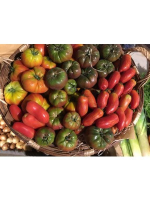 Tomates anciennes Bio de-France- le kg (non hybrides, population)