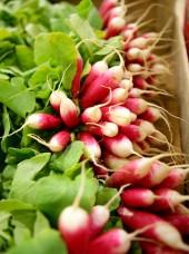 Botte de radis à bout blanc Bio Alsace France-la pièce