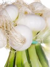 Botte oignons frais Bio Alsace France-la pièce