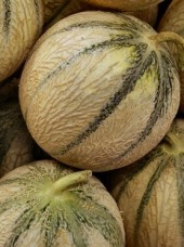 Melon extra Pinède de France-la pièce