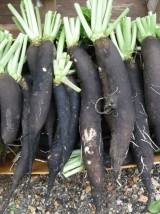 Radis noir Bio* de Moselle - 1 kg