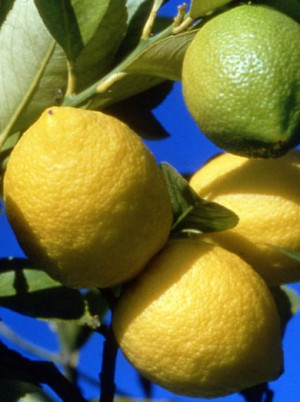 Citron Bio Sicile Italie -500g (Syracuse)