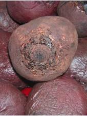 Betterave rouge cuite Bio de France, sous vide, 500g