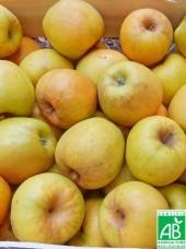 Pomme goldrush Bio Alsace France - 1kg (sucrée à croquer ou compote)
