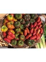 Tomates anciennes Bio d'Alsace-France